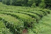 Чай черный байховый оптом по цене производителя.